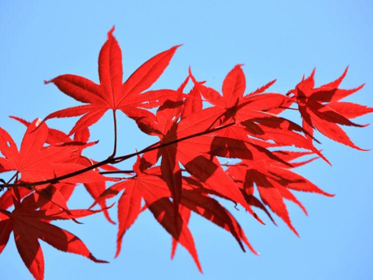秋の収穫感謝祭のお知らせ